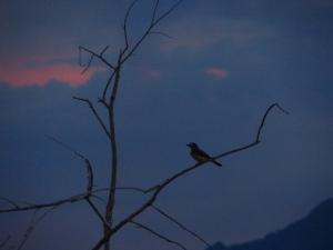 bird fab