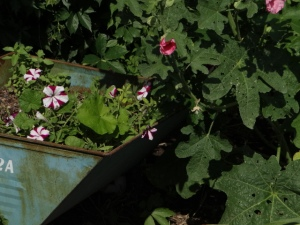 back flowers 2