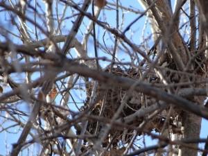 nest 8 (2)